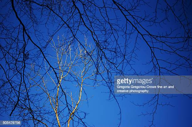 bare tree branches - gregoria gregoriou crowe fine art and creative photography. stock photos and pictures