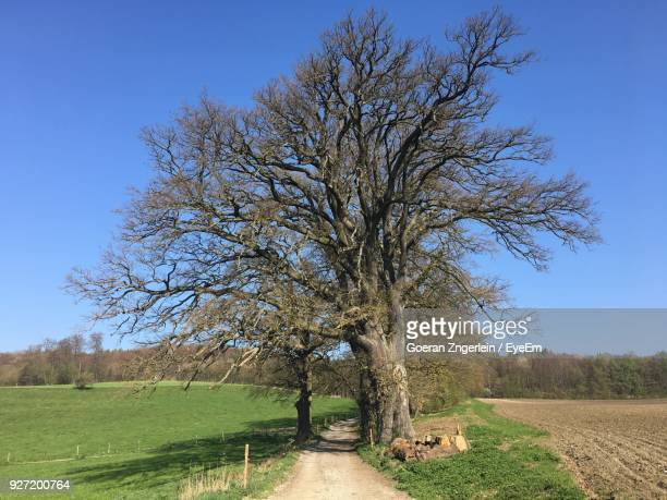 Bare Tree By Farm Against Clear Blue Sky