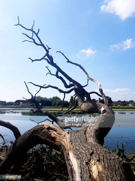 bare tree by lake against sky - portsmouth england stock pictures, royalty-free photos & images