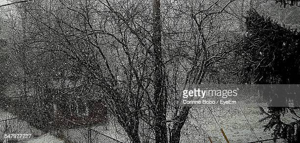 bare tree in snowy weather - corinne paradis photos et images de collection