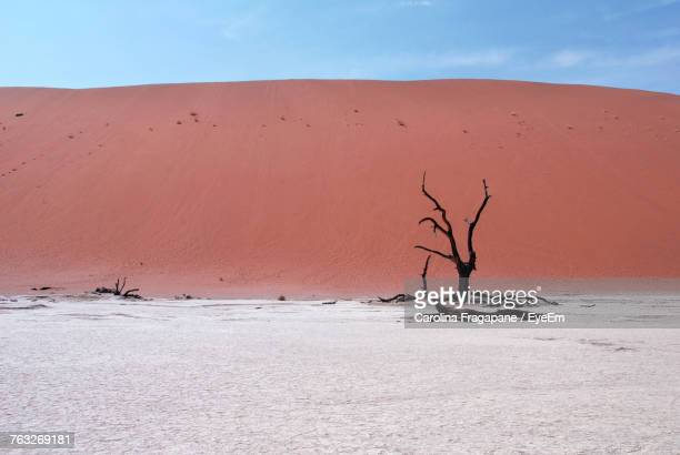 bare tree in the desert - carolina fragapane stock pictures, royalty-free photos & images