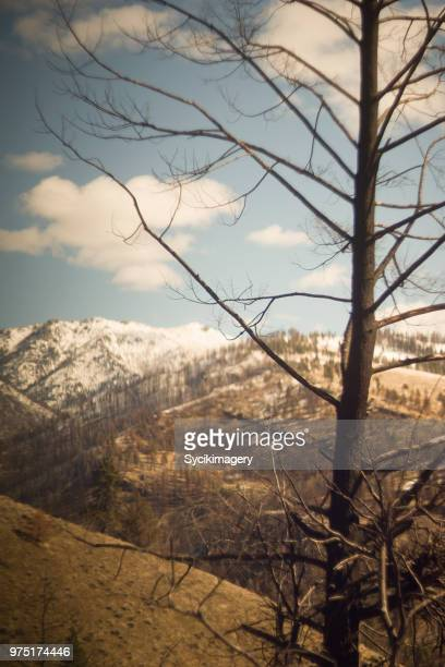 Bare tree, mountains in background