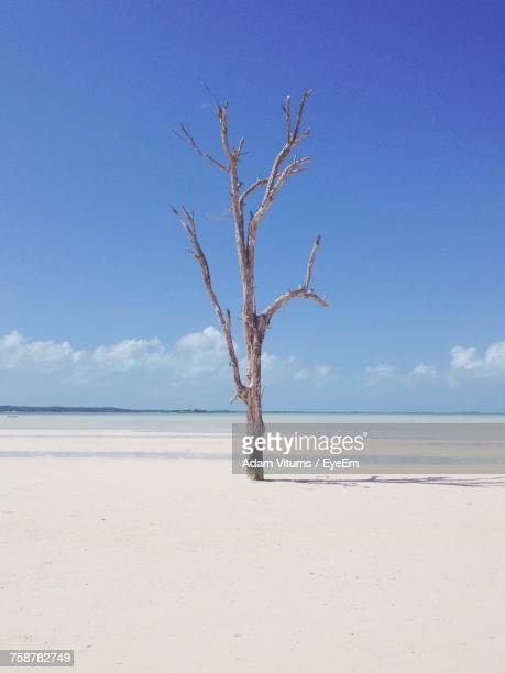 bare tree on beach against blue sky - bare tree stock pictures, royalty-free photos & images