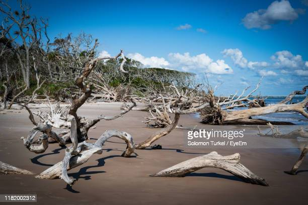 bare tree on beach against sky - solomon turkel stock pictures, royalty-free photos & images