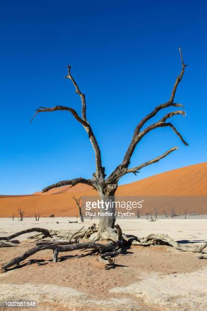 bare tree on desert against clear blue sky - keiffer fotografías e imágenes de stock