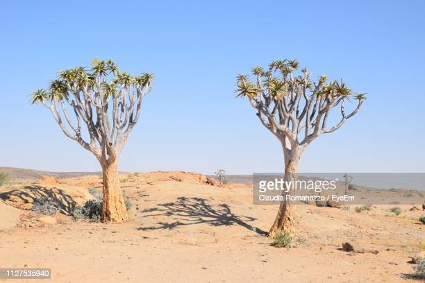 bare tree on desert against clear sky - claudia romanazzo foto e immagini stock