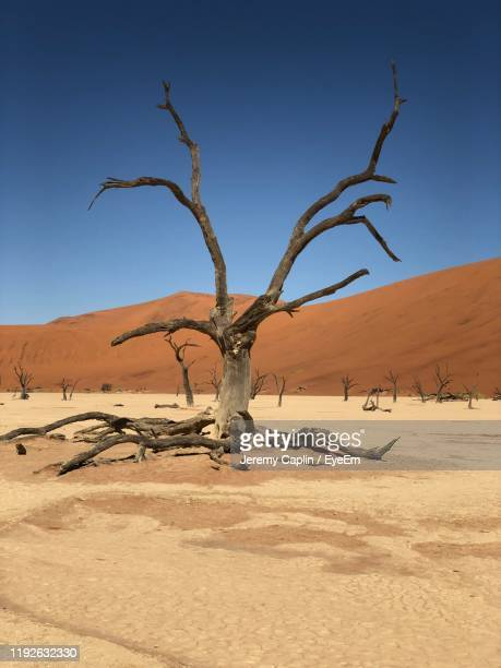 bare tree on desert against clear sky - petrified log stock pictures, royalty-free photos & images