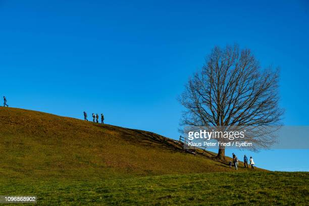 bare tree on field against clear blue sky - saalfelden stock pictures, royalty-free photos & images