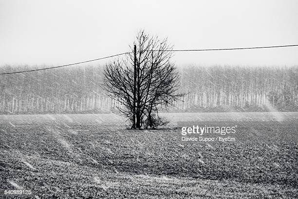 Bare Tree On Field Against Clear Sky During Monsoon