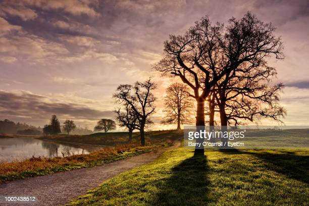 bare tree on field against sky during sunset - kildare stock photos and pictures
