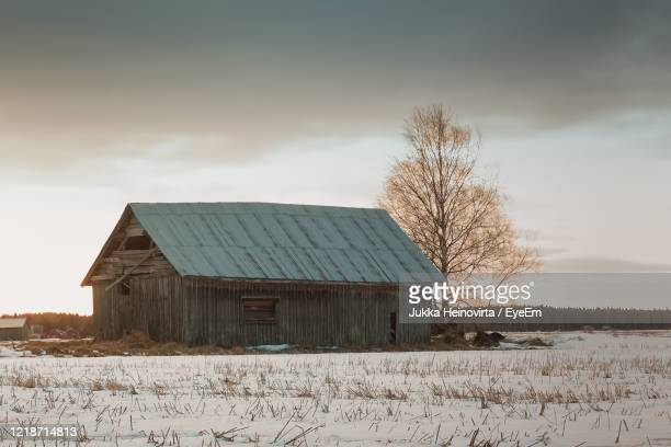 bare tree on field against sky during winter - heinovirta stock pictures, royalty-free photos & images