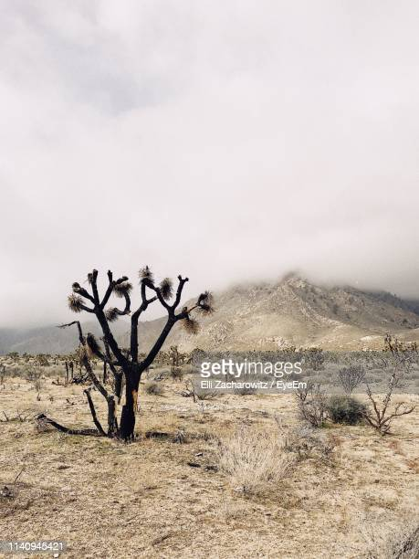 bare tree on field against sky - agate stock pictures, royalty-free photos & images
