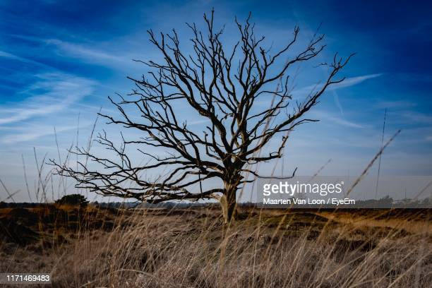bare tree on field against sky - bare tree stock pictures, royalty-free photos & images
