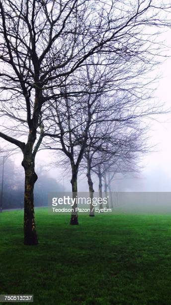 Bare Tree On Field Against Sky