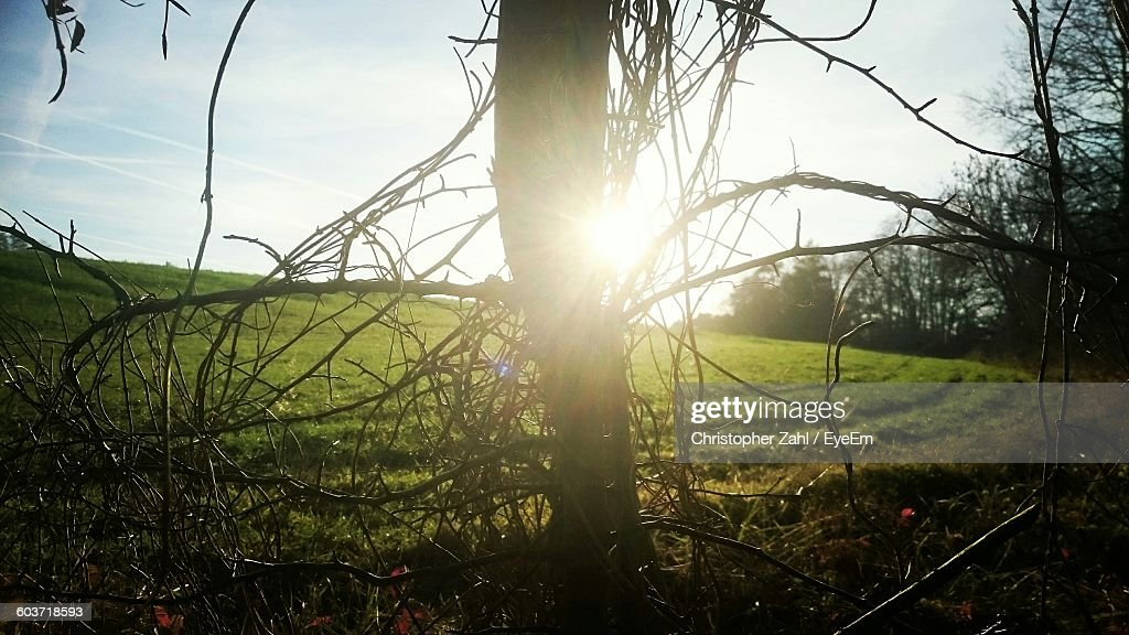 Bare Tree On Field During Sunny Day : Stock Photo