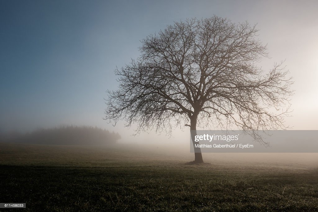 Bare Tree On Field In Foggy Weather : Stock-Foto