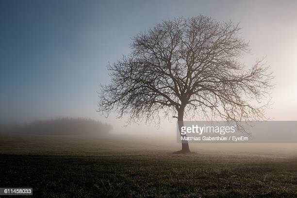 bare tree on field in foggy weather - matthias gaberthüel stock-fotos und bilder