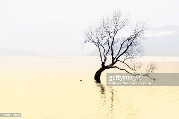 bare tree on landscape against sky - bare tree stock pictures, royalty-free photos & images