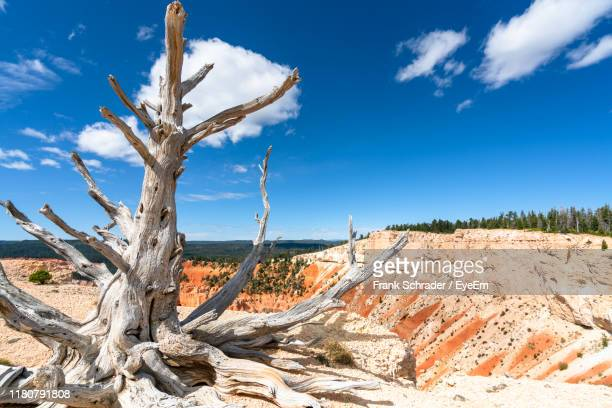bare tree on landscape against sky - frank schrader stock pictures, royalty-free photos & images