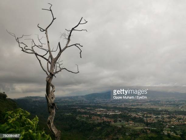 bare tree on landscape against sky - oppie muharti stock pictures, royalty-free photos & images