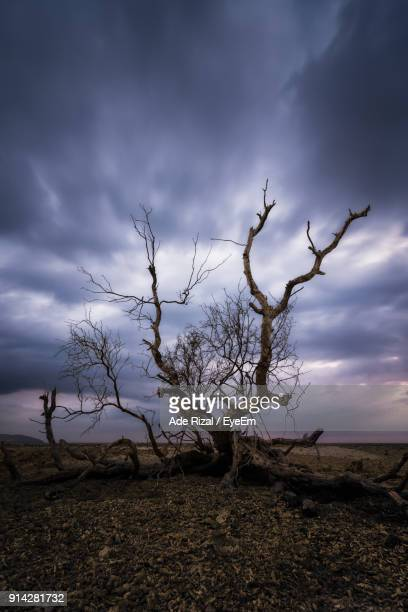 bare tree on landscape against sky - ade rizal stock photos and pictures