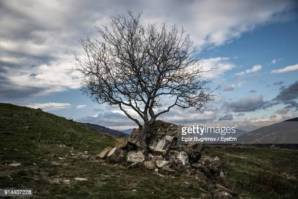 Bare Tree On Mountain Against Sky