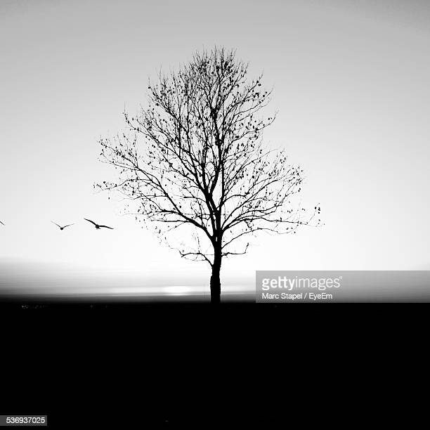 bare tree on silhouette field against clear sky at dusk - bare tree stock pictures, royalty-free photos & images