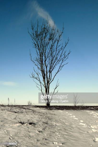 bare tree on snow covered field against sky - colbing stock pictures, royalty-free photos & images