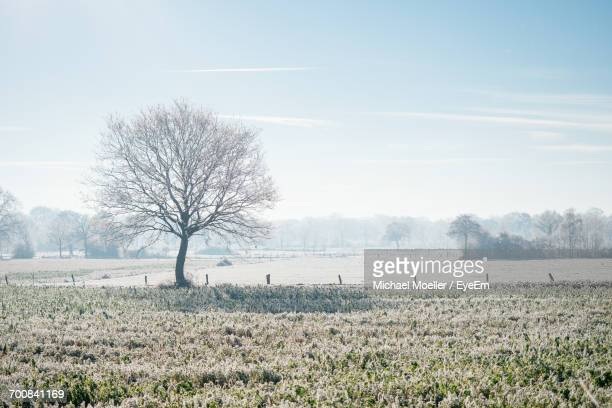 bare tree on snow covered field against sky - bare tree stock pictures, royalty-free photos & images