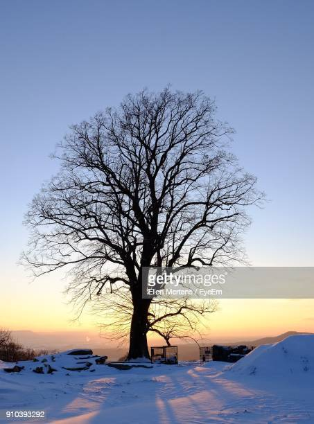 bare tree on snow covered landscape against clear blue sky - mertens stock pictures, royalty-free photos & images
