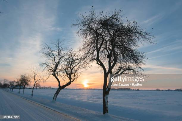 Bare Tree On Snow Covered Landscape Against Sky At Sunset