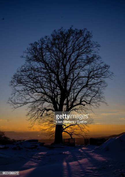bare tree on snow covered landscape at sunset - mertens stock pictures, royalty-free photos & images