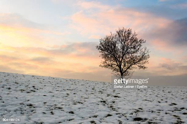 Bare Tree On Snow Covered Landscape At Sunset