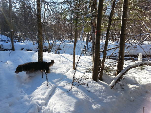 Bare Tree On Snow Covered Landscape With My Dog
