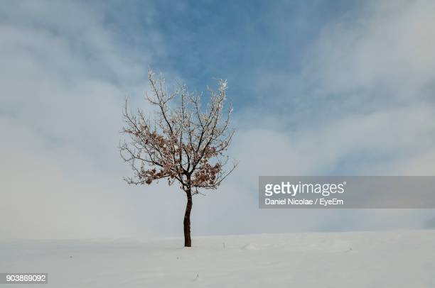 Bare Tree On Snowfield Against Sky