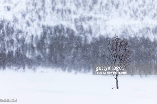 Bare Tree On Snowfield During Snowfall