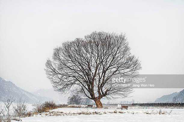 A bare tree on the white snowfield