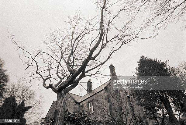 bare tree overlooking a house, england - marcoventuriniautieri stock pictures, royalty-free photos & images