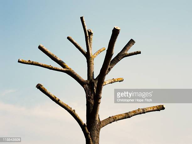 bare tree - topiary stock photos and pictures