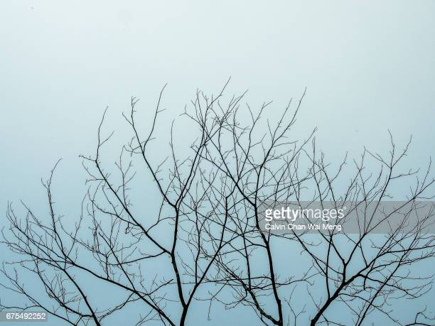 bare tree silhouette in the morning - kahler baum stock-fotos und bilder