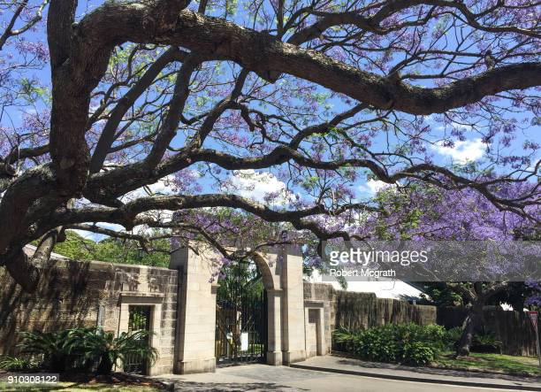 Bare tree trunks and Jacanda trees in flower outside a sandstone wall and Victorian entrance gateway.