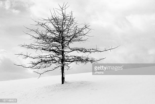 Bare tree with snow on branches surrounded by deep snow