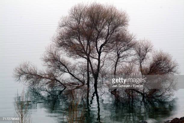 Bare Trees Against Clear Sky In Foggy Weather