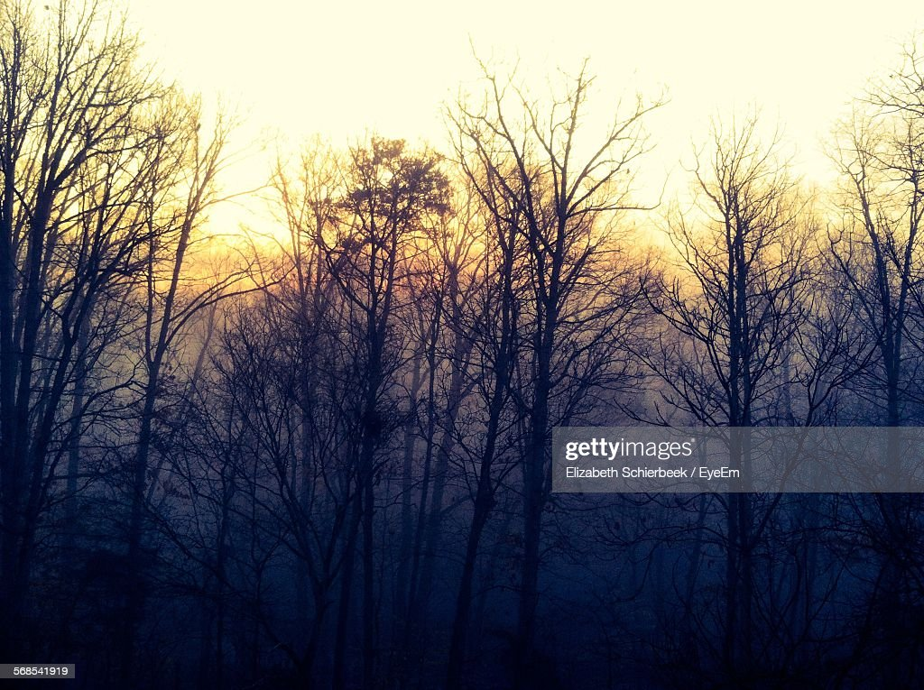 Bare Trees Against Sky During Foggy Weather In Forest : Stock Photo