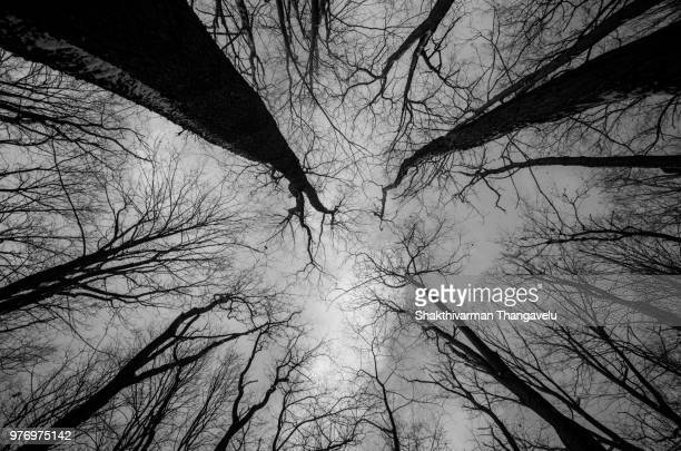 bare trees against sky, laurel mountain, westmoreland county, pennsylvania, usa - mountain laurel stock pictures, royalty-free photos & images
