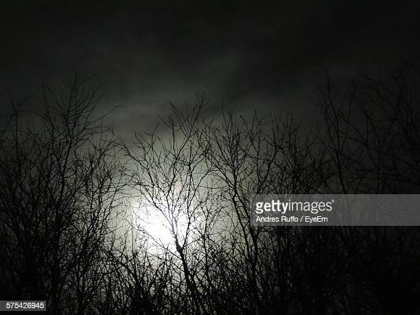 bare trees against sky with moon at night - andres ruffo stock pictures, royalty-free photos & images