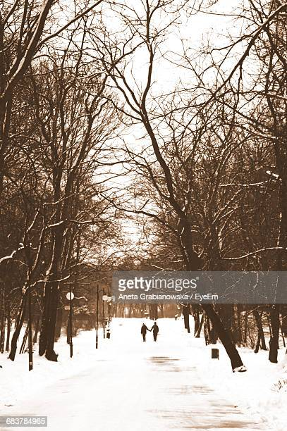 Bare Trees Along Snow Covered Road