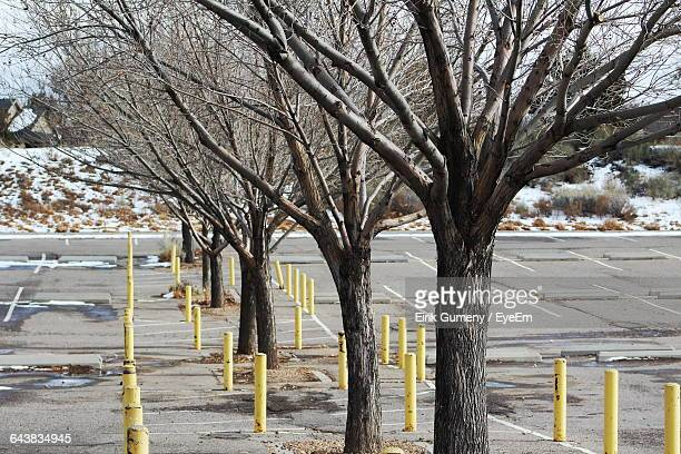 Bare Trees Amidst Bollards At Parking Lot