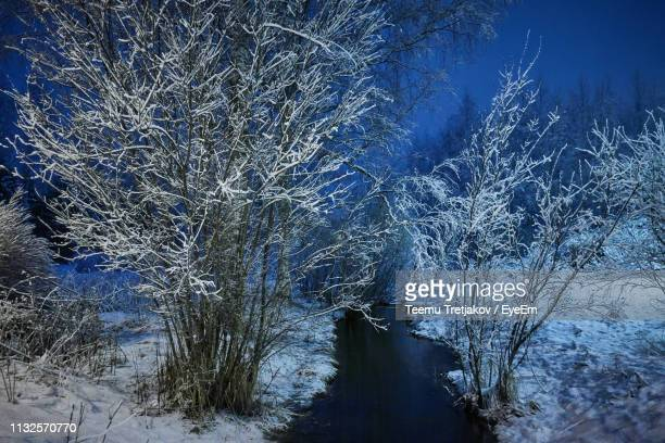 bare trees amidst frozen lake in forest - teemu tretjakov stock pictures, royalty-free photos & images
