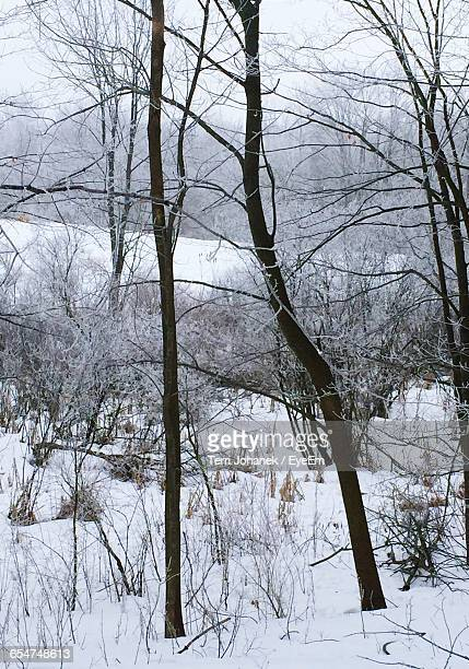 Bare Trees And Dried Plants On Snowfield